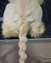 crazy weird cat groomings