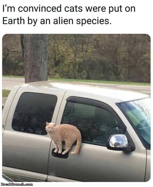 Cute Thanksgiving Wallpaper Cat Cat Is Alien Species Breakbrunch