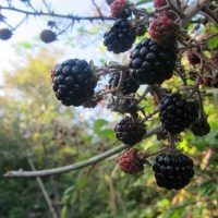 Hedgerow crumble