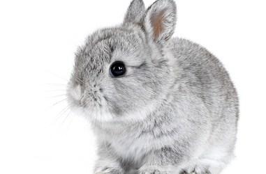 Why You Need Balance Between Big Game and Small Rabbits