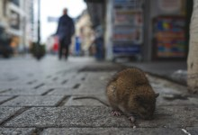 Photo of Hantavirus, New Virus Emerges From China After Coronavirus