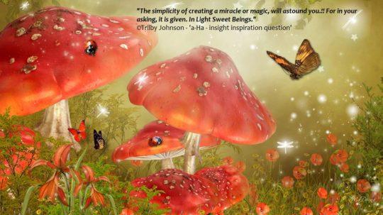 mystical-mushrooms_5554