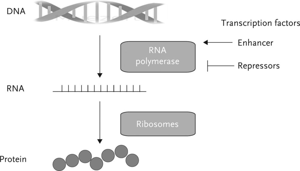 medium resolution of basic science epigenetic programming and the respiratory system