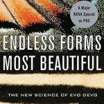 Cover of Endless Forms Most Beautiful by Sean Carroll