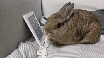 Photo of Breakfast, a brown bunny, apparently looking at a page of text on an ereader.
