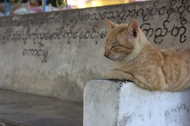 Chat Myanmar