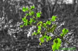 Green skinned Holly