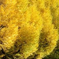Beautiful Autumn in Japan