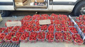 It's strawberry season