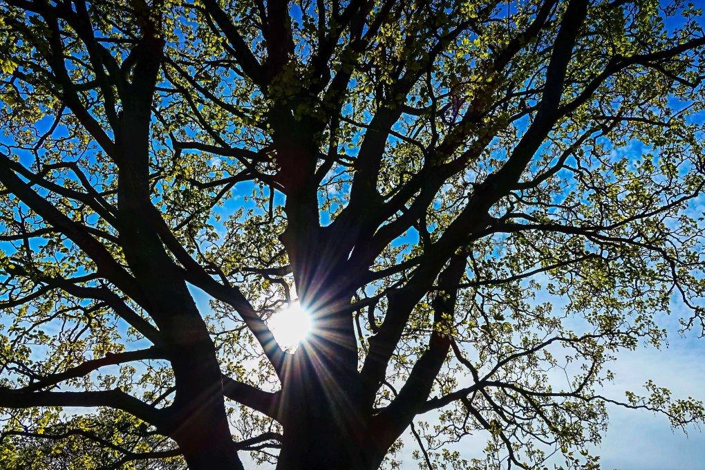 Photo shows an art vivid mode photo of sunlight through branches