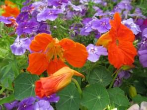 цветочный микс4