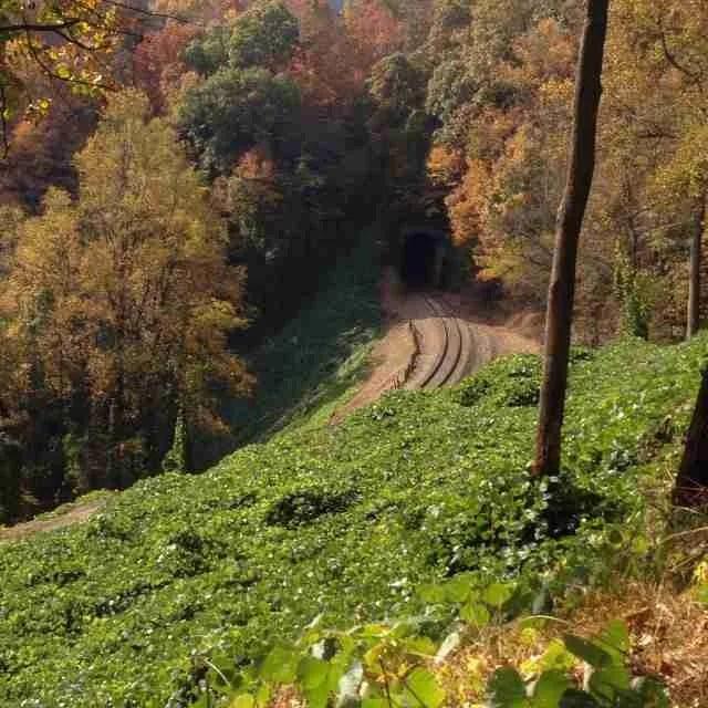Kitsuma train