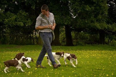 Breckmarsh-Gundogs-1060training