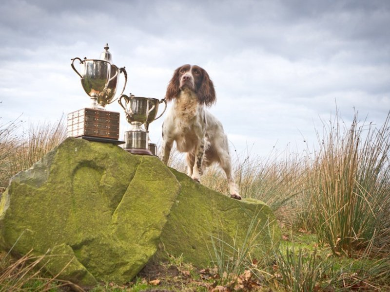 Henry is placed 2nd and awarded Top Dog at 2017 ESS Championships