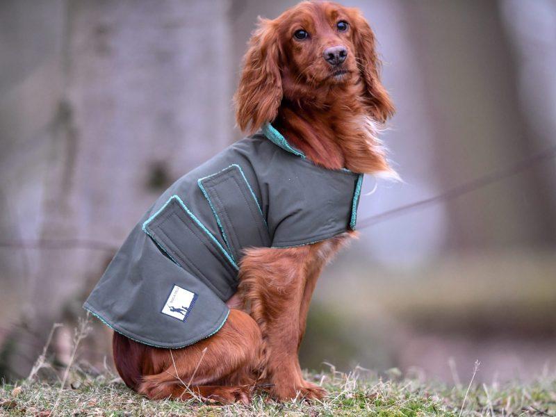 Dog and Field Waterproof Coat