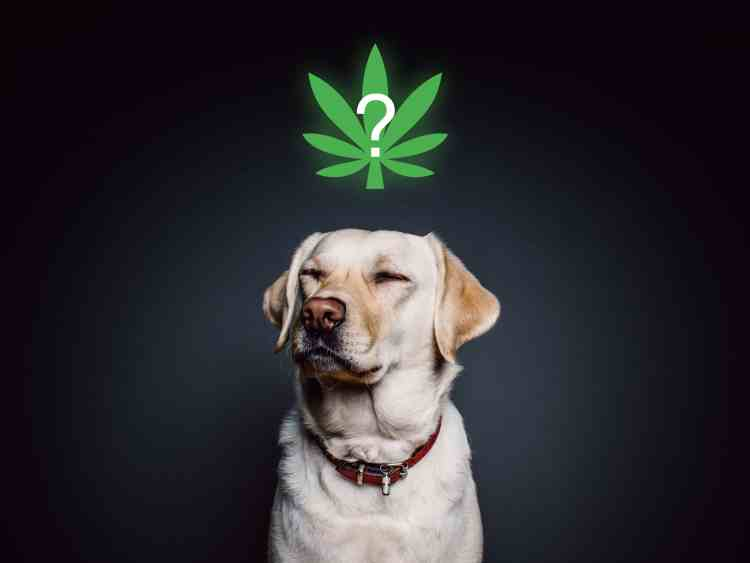 Is CBD oil good for pets and animals?