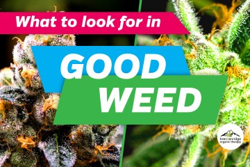 What to look for in good weed article graphic