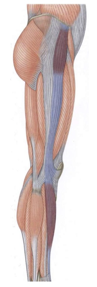 An overlooked cause of knee pain | b-reddy.org