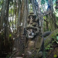 Sacred Monkey Forest in Ubud, Bali
