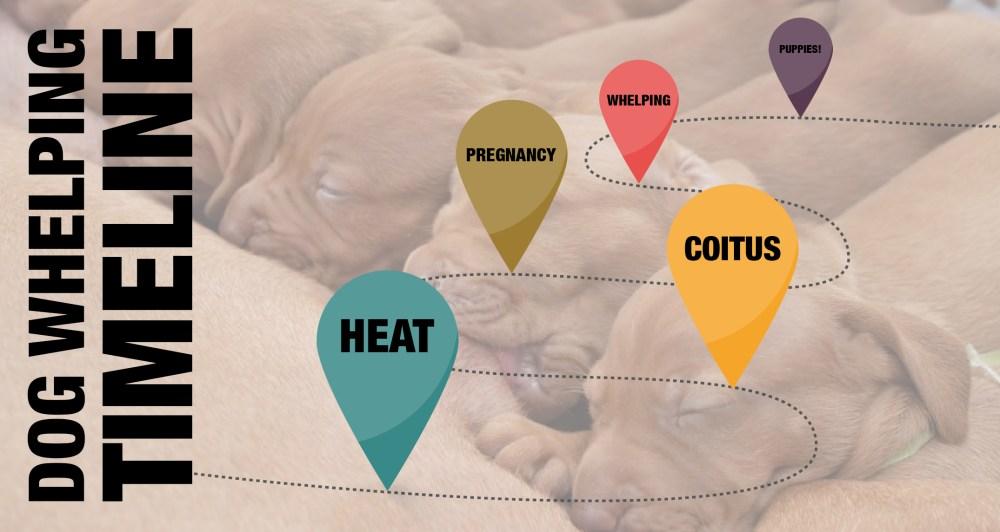 medium resolution of breeding business