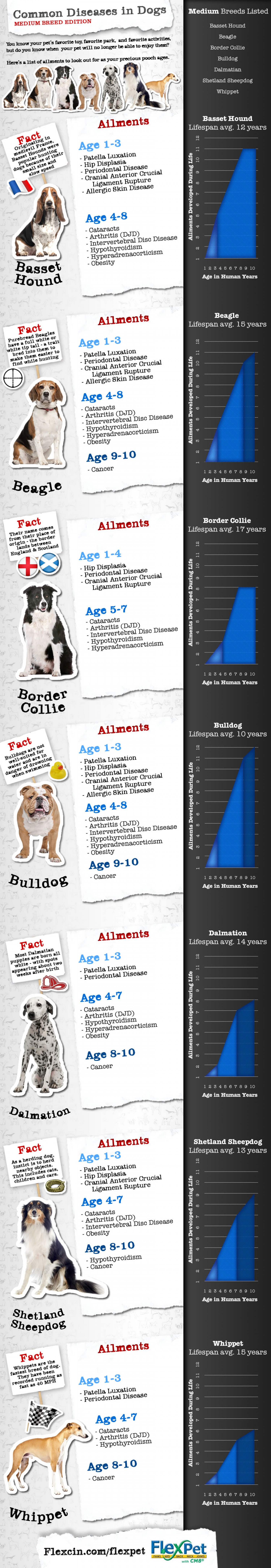 14 Best Dog Health Amp Safety Infographics Ever Made
