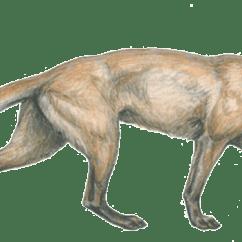 Bear Skull Diagram Njdot Straight Line Origins & Evolution Of The Dog (generation After Generation)
