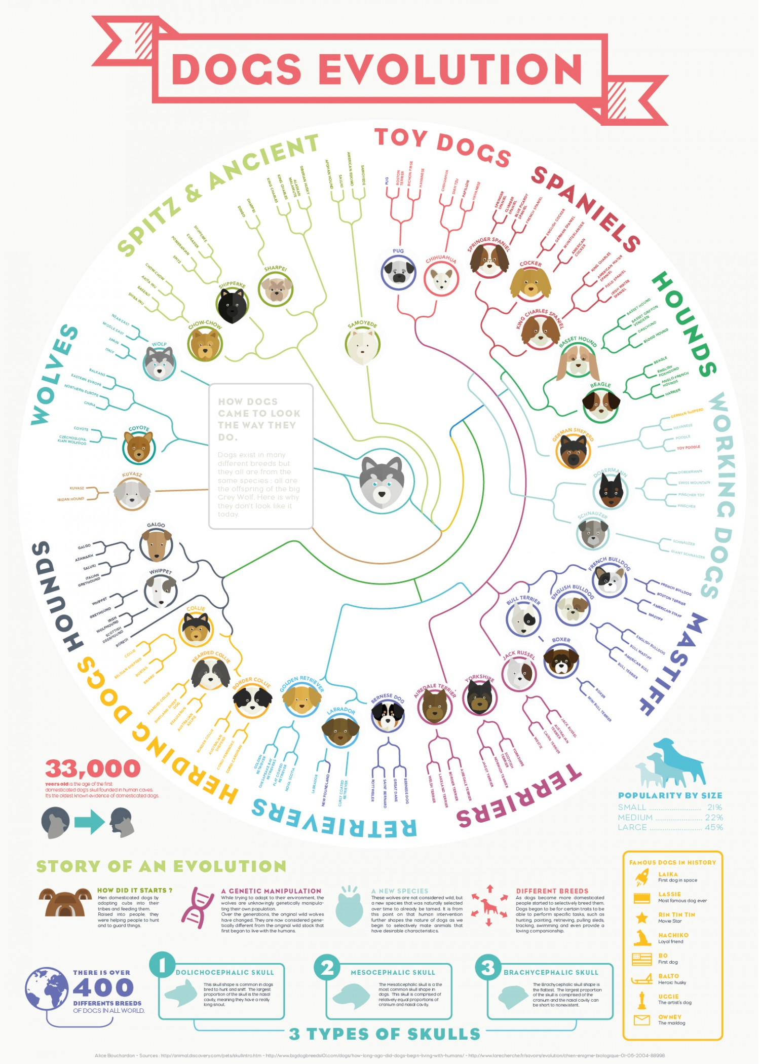 diagram of evolution timeline rat thymus anatomy origins and the dog generation after