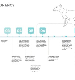 dog pregnancy stages timeline chart [ 1123 x 794 Pixel ]