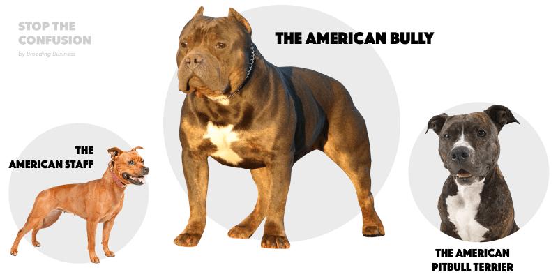 different types of pitbulls