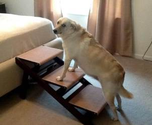 Pet Studio Dog Steps