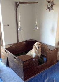 5 Essential Tips For a Nice Whelping Box