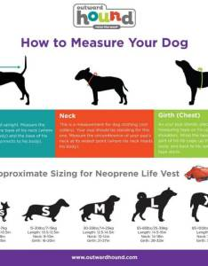 Dog lifejackets measurements buying  lifejacket also top best life jackets for dogs in  free guide rh breedingbusiness