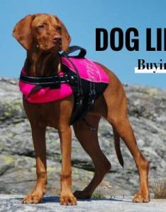 Best life jackets for dogs also top in  free buying guide rh breedingbusiness