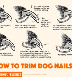 top 5 best dog nail clippers pliers scissors grinders rh breedingbusiness com blank dog diagram dog [ 1701 x 1372 Pixel ]
