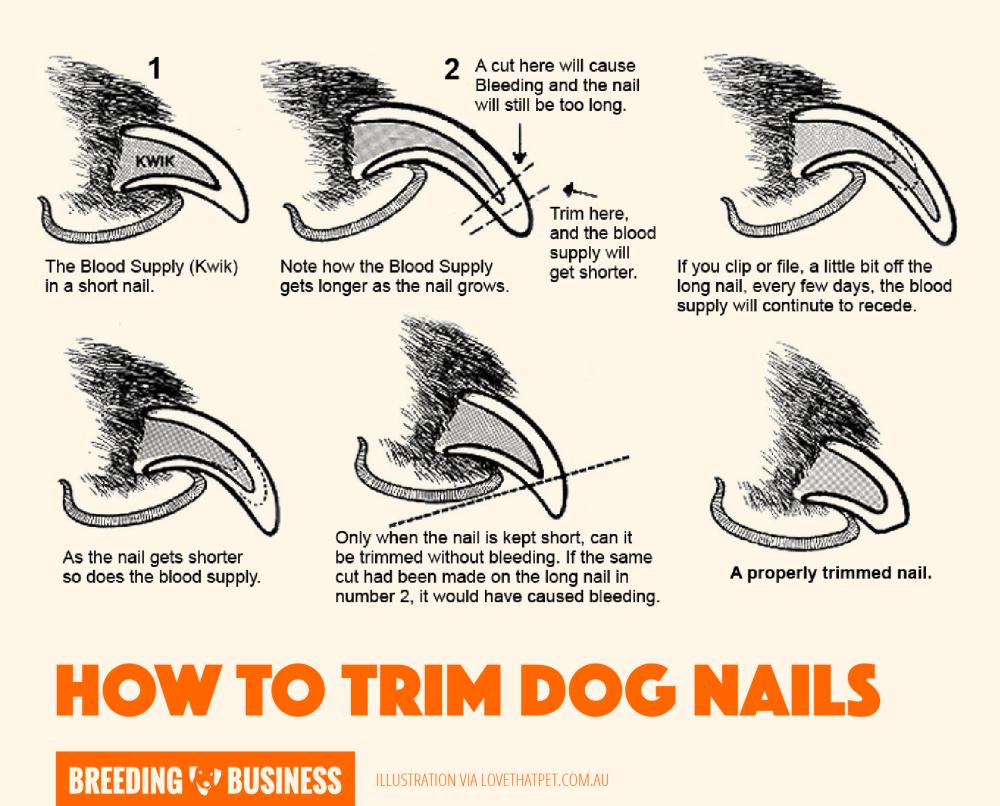 medium resolution of top 5 best dog nail clippers pliers scissors grinders rh breedingbusiness com blank dog diagram dog