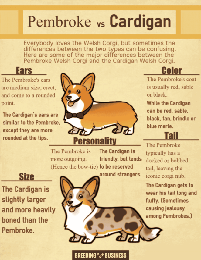differences between pembroke and cardigan welsh corgis