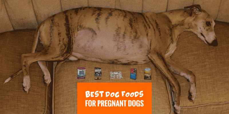 honest kitchen dog food reviews cheap cabinets sale 6 best foods for pregnant dogs — human-grade, freeze ...