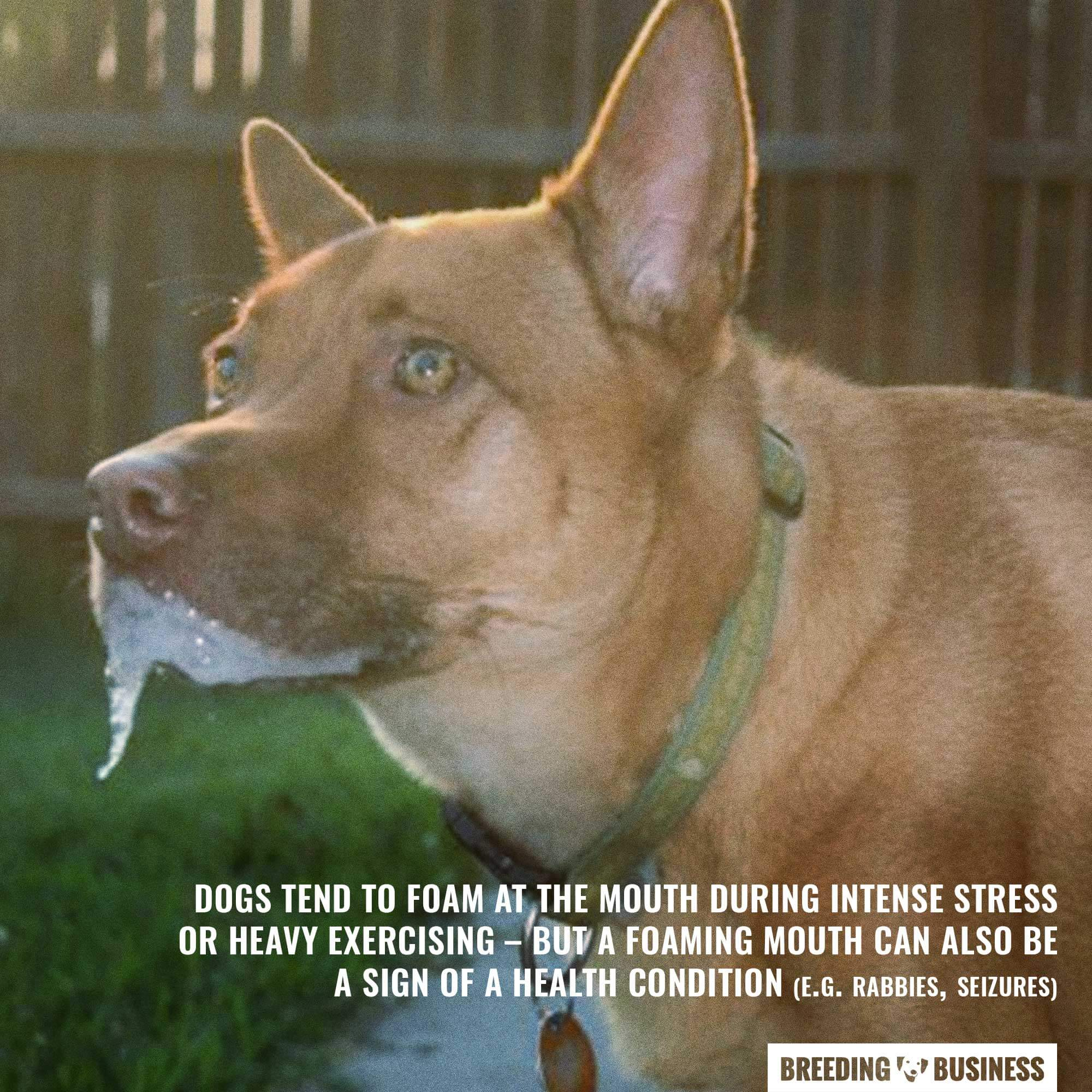 Why Do Dogs Foam at the Mouth – Reasons Solutions ...