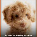 Top 20 Tips To Follow When Naming Your New Puppy