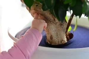 Blumen und Zimmerpflanzen kindersicher machen