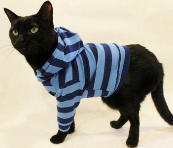 couture Sweat à capuche pour chat !