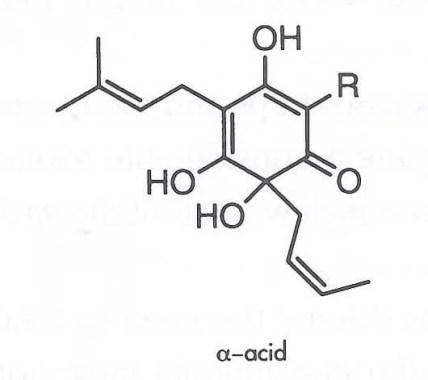 alfa ácido - lúpulo