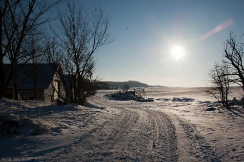 Brejnholts Juletræer 014