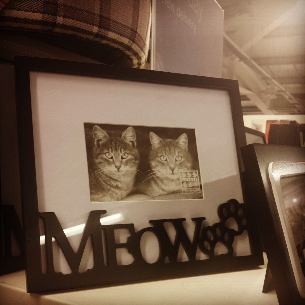 You had me at meow! TKmaxx (6/6)