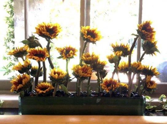 fall-sunflowers-planting-510x382