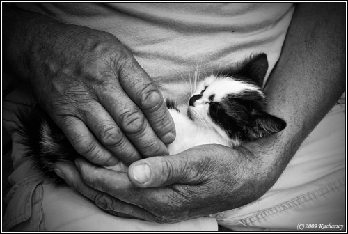 strong hands kitten vulnerability