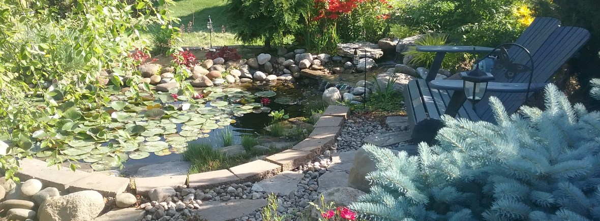 backyard pond 2017