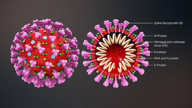 scientificanimations.com's coronavirus structure illustration.