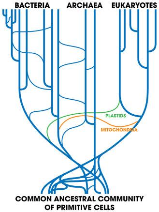 Barth F. Smets/Barkay/Colvin's Tree of Life with horizontal gene transfer.