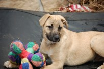 Jangle was adopted in May 2013 after 2 months at BMR.